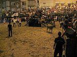 Fiestas Patronales de Peñíscola (Septiembre). Vaquillas