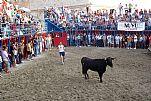 Fiestas Patronales de Peñíscola (Septiembre). Vaquillas en la Plaça de Bous