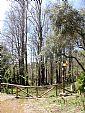 Parque Natural de la Sierra de Irta. Arboleda